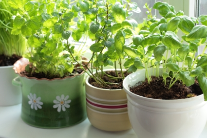 Indoor Herb Garden to Save Money